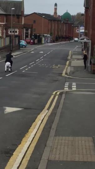 Lad riding a fake cow with wheels down the street collection item