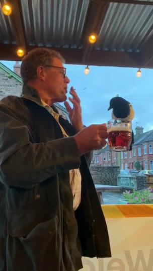 Bird sits on the edge of lad's pint of beer collection item