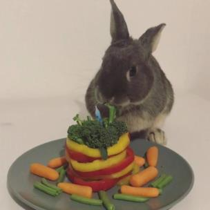 Rabbit celebrating his first birthday with a vegetable cake collection item