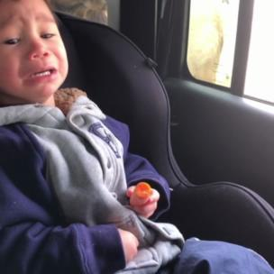 Kid crying when a moose sticks its head through car window because it wants a carrot collection item